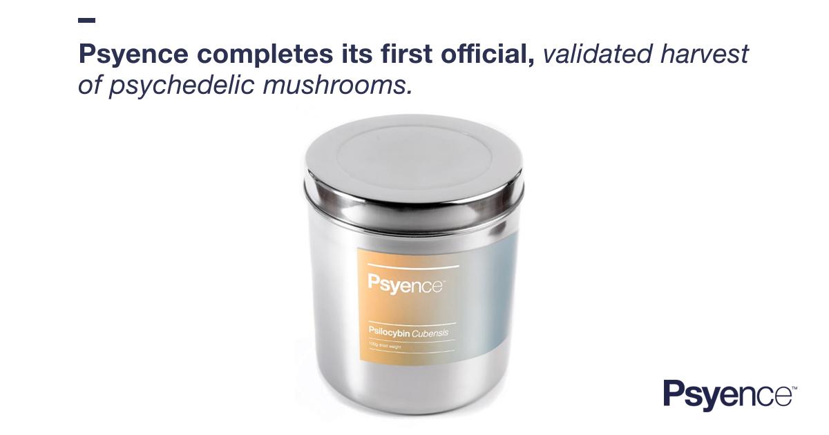 Real Psilocybin | Psychedelic Mushrooms